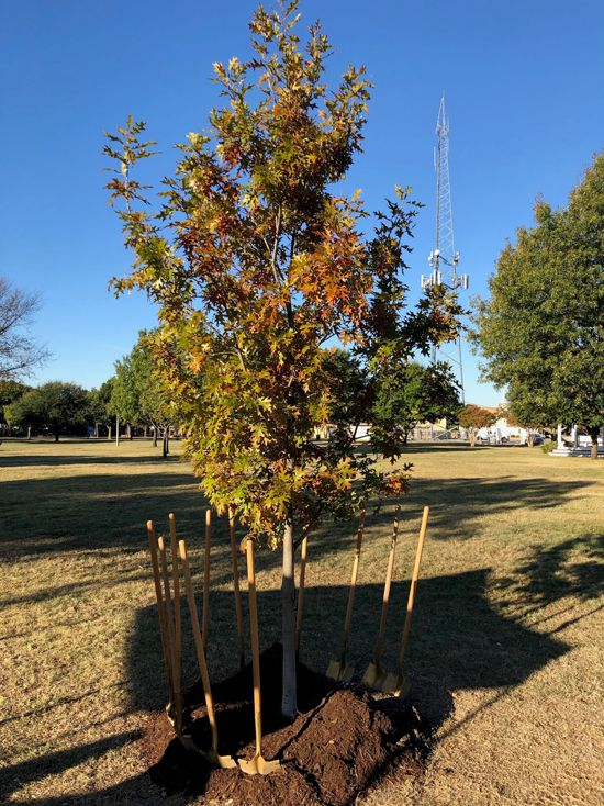 duncanville arbor day tree planting at armstrongw